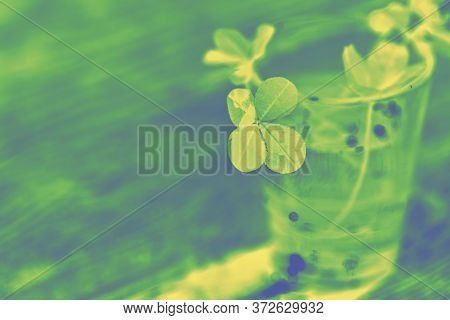 Toned Photo Of A Four Leaf Clover In Green Yellow Tones. Four-leaf Clover Glass With Water Wooden Ba