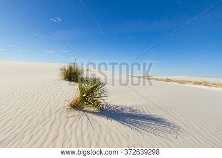 Desert Sand Dune Background. Soap Tree Yucca Plant In The Sand Dunes Of White Sands National Park In