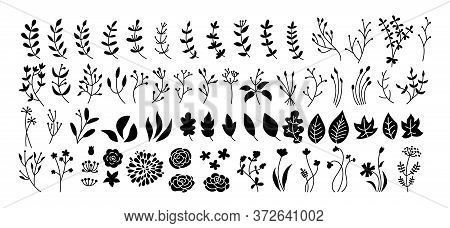 Flower, Branch And Leaf Set, Botanical Black Glyph. Abstract Silhouette Different Beautiful Floral D