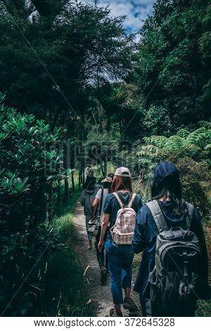 Adventurous People Wearing Backpacks Walking On Pathway Near Green Leaf Plants In Rain Forest For Ad