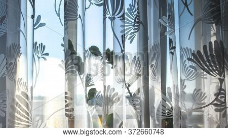 Indoor Plants On The Windowsill Through A Translucent Curtain. Defocused Background And Copy Space,