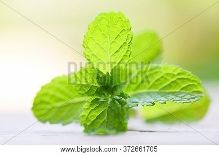 Peppermint Leaf On Wooden Background / Fresh Mint Leaves Nature Green Herbs Or Vegetables Food