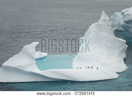 Gentoo Penguins On A Small Iceberg In Antarctica
