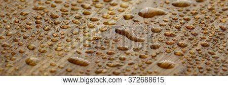 Naturally Oak Tree With Water Droplets Coated With An Oleophobic Composition Close-up Background. Pr
