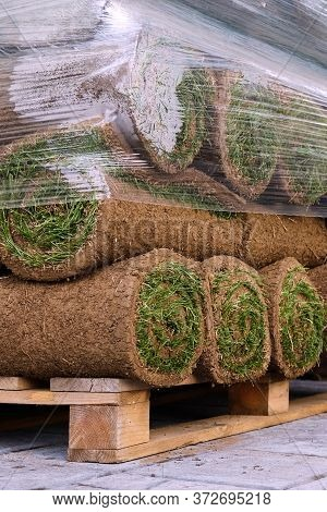 Pallets With Sod Turf Grass. The Stacked Fresh Sod Rolls For New Grass Lawn. The Rolled Grass Lawn I