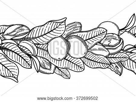Graphic Shea Nuts And Leaves. Vector Repeated Border