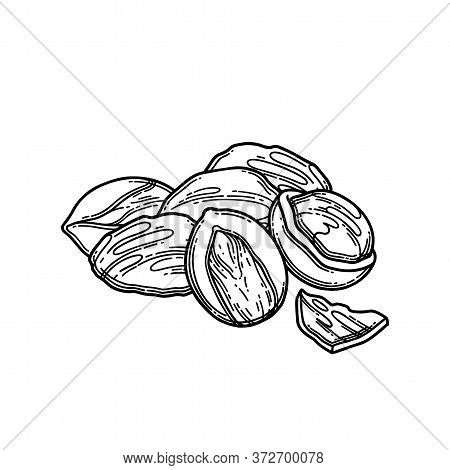 Graphic Bunch Of Dry Shea Nuts. Vector Botanical Design