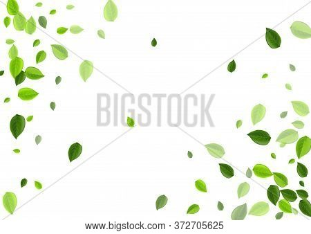 Mint Leaves Fly Vector Design. Organic Greens Border. Swamp Foliage Fresh Wallpaper. Leaf Falling Ba