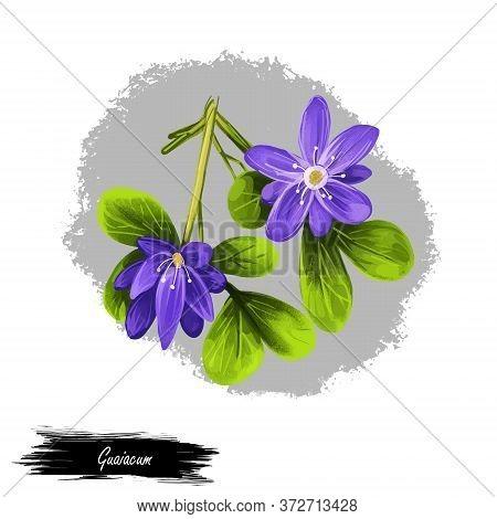 Guaiacum Digital Art Illustration Isolated On White. Lignum-vitae, Guayacan, Or Ga Ac, Blue Flowers
