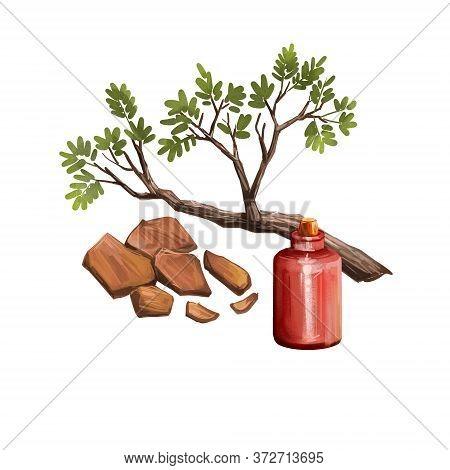Yohimbe Isolated Digital Art Illustration. Pausinystalia Bottle, Branch Dry Bark. Extracts Yohimbe U