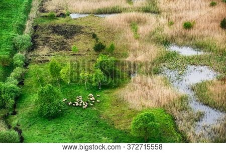 Aerial View At The Sheeps Herd. Landscape With Animals. View From Air At The Farmland. Composition W