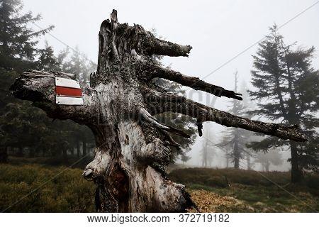 Red Tourist Walking Path Marker On Dead Tree On A Foggy Day, Jeseniky, Czech Republic. E3 Walking Pa