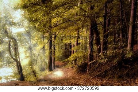 Walk Along A Mysterious Forest Path With Sunlight. A Mystical Landscape.