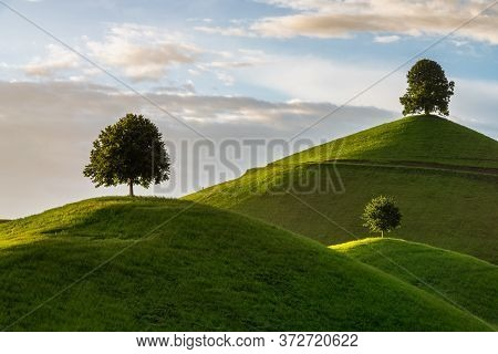 Picturesque Green Hills With Lone Trees. Fabulous Landscape.