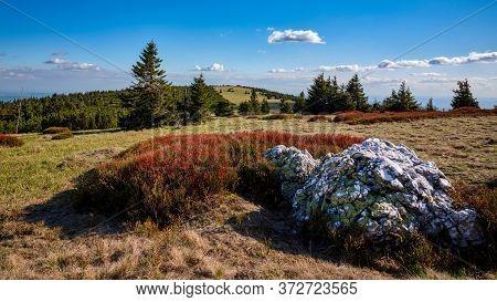 Colorful Red Blueberry Bushes On A Mountain Ridge, Jeseniky, Czech Republic.