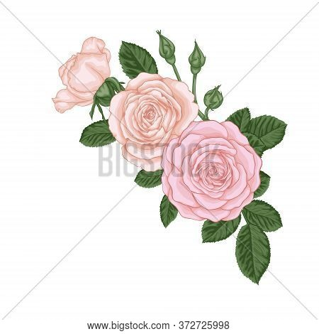 Beautiful Bouquet With Vintage Pink Roses Buds And Leaves. Floral Arrangement. Design Greeting Card