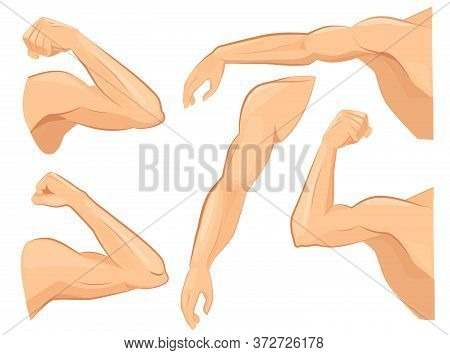 Muscle Hands. Male Power Body Muscles Strong Biceps Vector Cartoon Sport Illustrations. Strong Power