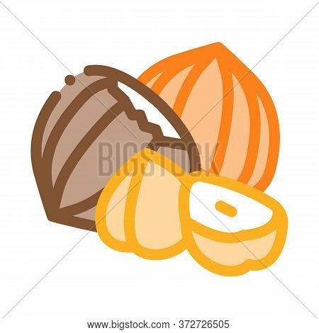 Hazelnut Nut Icon Vector. Hazelnut Nut Sign. Color Symbol Illustration