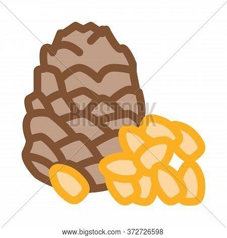 Pine Nut Icon Vector. Pine Nut Sign. Color Symbol Illustration