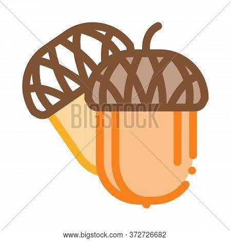 Acorn Nut Icon Vector. Acorn Nut Sign. Color Symbol Illustration