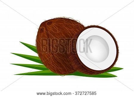 Coconut Half Cot On Leaf Green, Coconut Brown Fruit Isolated On White, Illustration Coconut