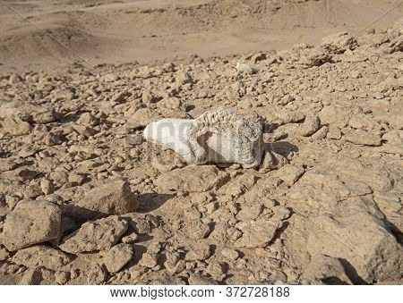 Old Dried Animal Bone Rotting Decomposing In Remote Arid Harsh Desert Landscape