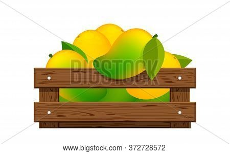 Mango In Wood Crate Box Isolated On White, Mango Fruit Pack In Wooden Crate