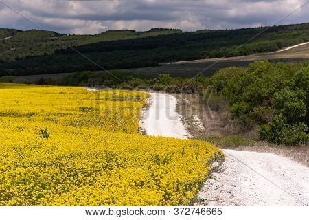 Rapeseed Field And Road On A Sunny Day. Beautiful Landscape With A Yellow Field. Agricultural Field.