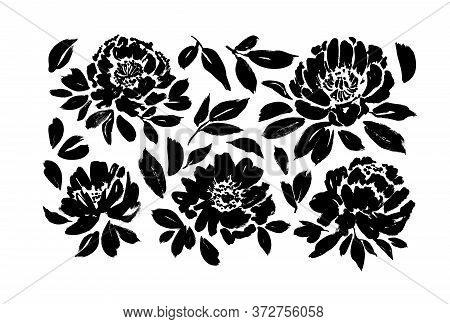 Roses, Peonies, Chrysanthemums Hand Drawn Vector Set. Black Brush Paint Flower Silhouettes With Leav