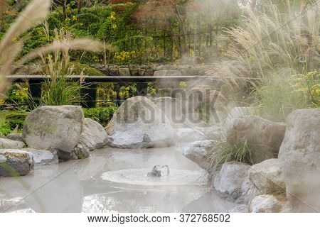 The Oniishi Bozu Jigoku (mud Hell) Is One Of Eight Beppu Hot Spring (onsen) With Flower Grass Or Poa