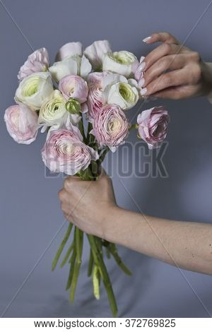 Spring Flowers Bouquet In Female Hands. Pink And White Ranunculus Flowers Isolated On Gray Backgroun