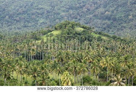 Palm Trees And Hilltop At Setangi, Near Senggigi, Lombok, Indonesia. Exotic Tropical Destination Bea