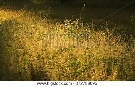 Grass, Flowers And Vegetation Under Warm Afternoon Sun Rays In Tropical Field, On Gili Air Island, L