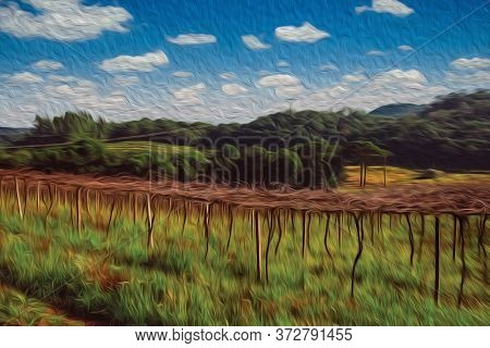 Rural Landscape With Rows Of Leafless Grapevines In A Vineyard And Wooded Hills Near Bento Goncalves