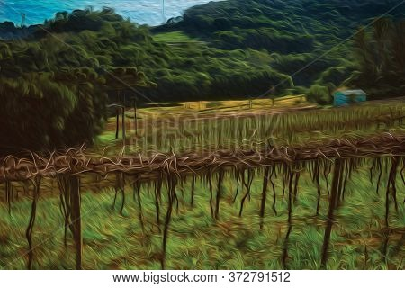 Rural Landscape With Rows Of Leafless Grapevines In A Vineyard With Country House Near Bento Goncalv