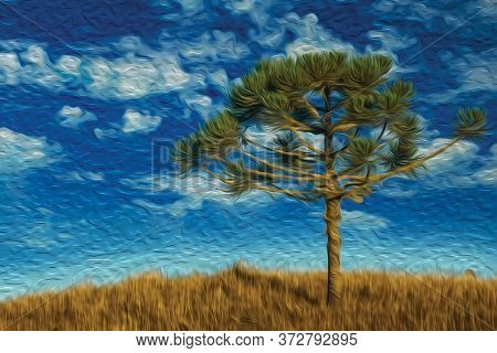 Pine Tree On Hilltop From Rural Lowlands Called Pampas Covered By Dry Bushes Near Cambara Do Sul. A