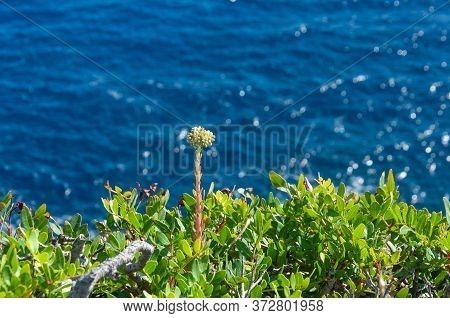 Mediterranean Wild Plants, With The Mediterranean Sea In The Background. Unfocused Background