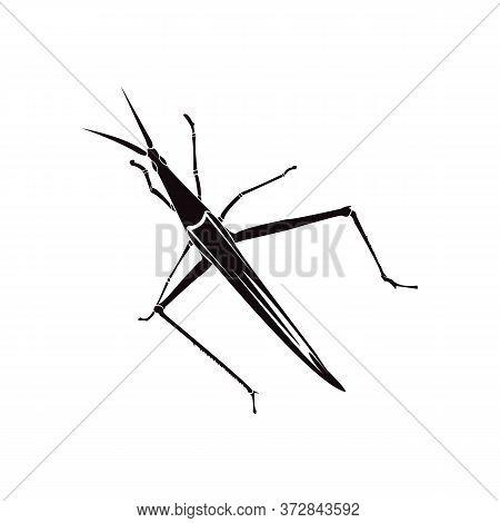 Black Grasshopper Silhouette On A White Background
