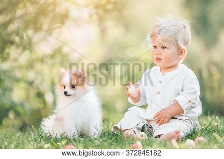 Little Baby Boy Sitting On The Grass In Summer, , Playing With A Small Pomeranian Puppy. Selective F
