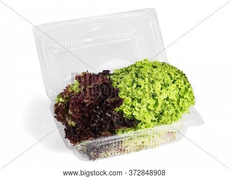 Red and Green Lettuse in Plastic Container on White Background