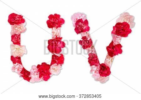 Flower Font Alphabet U V Set (collection A-z), Made From Real Carnation Flowers Pink, Red Color With