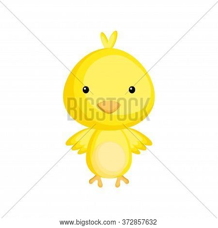 Cute Funny Baby Chicken Isolated On White Background. Adorable Animal Character For Design Of Album,
