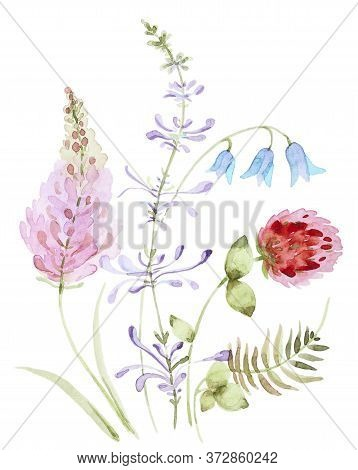 Watercolor Bouquets Of Clover And Bell Wild Flowers. Floral Composition Isolated On A White Backgrou