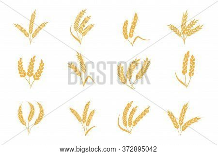 Wheat And Rye Ears. Harvest Stalk Grain Spike Icon. Gold Elements For Organic Food Logo, Bread Packa