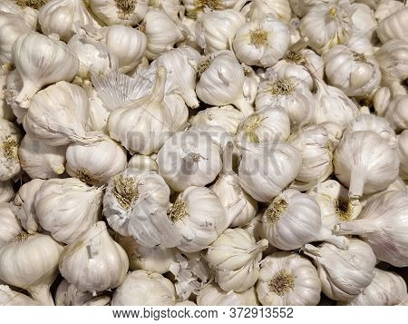 White Garlic Pile Texture. Fresh Garlic On Market Table Closeup Photo. White Garlic Head Heap Top Vi