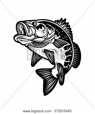 Largemouth Bass Fish. Carnivorous Freshwater Gamefish. Vector Illustration.