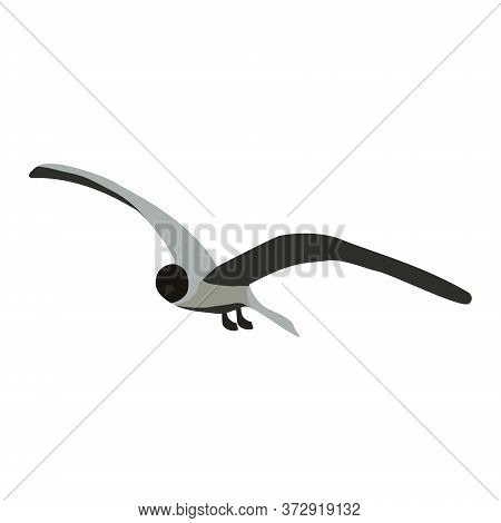 Soaring Seagull With Spread Wide Curved Wings Isolated On White. Tern Flying Bird In Gray Colors. Ve