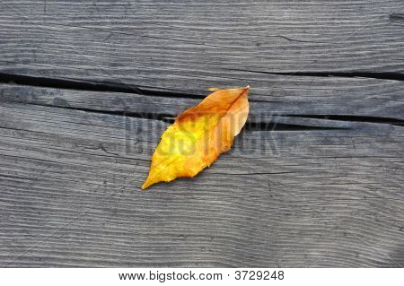 poster of One autumn leaf fall on old wood