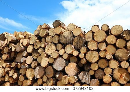 Pile Of Logs Cut By Lumberjacks During The Deforestation Of The Forest For Construction Activities