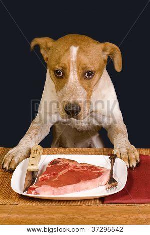 Dog Dinner Time.